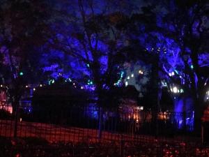 Spooky lit trees in Halloween Horror Nights